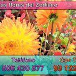 Tu flor según tu signo del zodiaco