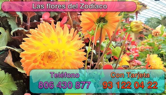 tu flor segun tu signo del zodiaco